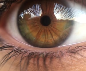 color, yellow, and eyes image