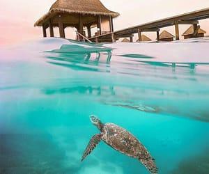 animals, beach, and blue image