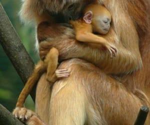 Animales, moño, and simio image
