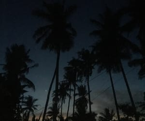 dawn, Island, and palm trees image