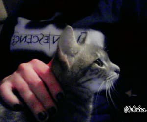 evanescence, tshirt, and kitten image