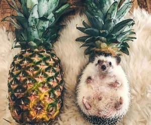 animal, love, and cuteness image