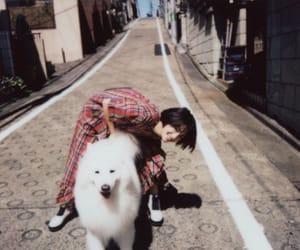 dog, film, and japan image