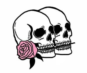 calavera, pink, and rosa image