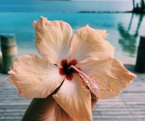 beach, flowers, and palms image