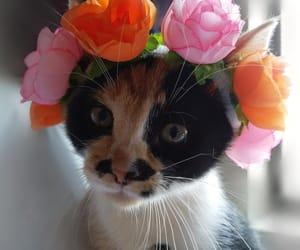 animals, flowers, and gato image