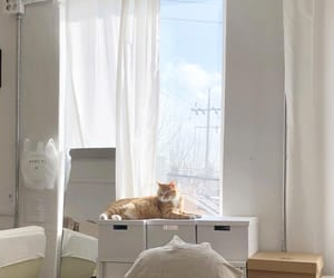 aesthetic, room, and cat image