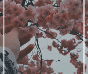 aesthetic, flowers, and gray image
