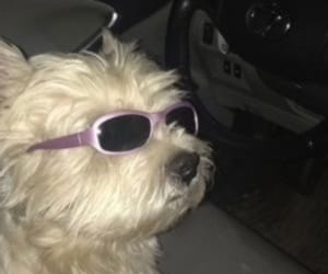 dog, savage, and cute image