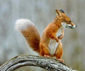 animals, nature, and squirrel image