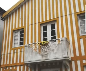 flowers, portugal, and yellow image