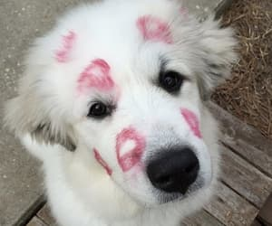 animal, puppy, and animals image