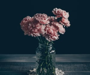 dark, flowers, and nature image