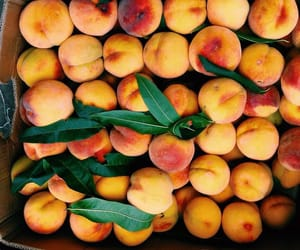 fruit, peach, and summer image