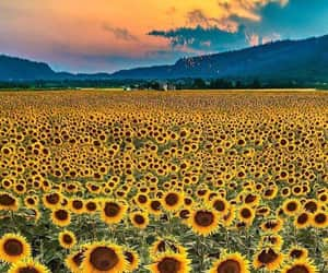 flowers, travel, and sunflower image