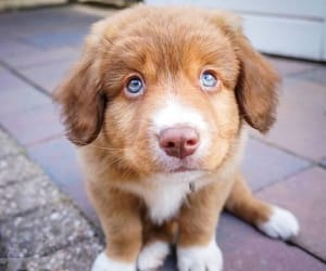 dog, adorable, and puppy image