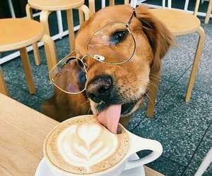 dog, animal, and coffee image