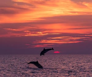 Croatia and sunset image