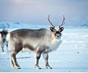 alaska, arctic, and circle image