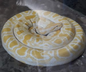 curl, snake, and yellow image