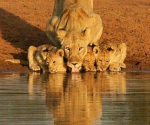 naturaleza, rey, and león image