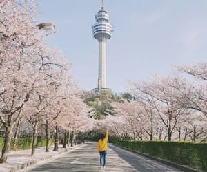 sakura, seoul, and travel image
