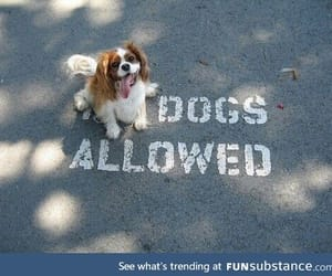 awesome, lol, and dogs image