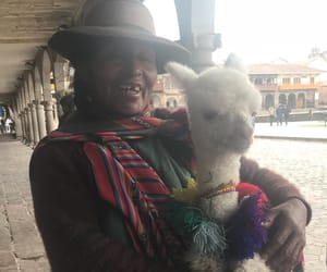 beauty, cusco, and baby lama image