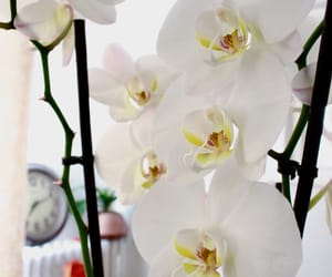 flowers, i love flowers, and orchidée image