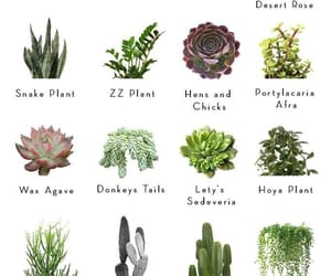 plants, succulents, and plant guide image