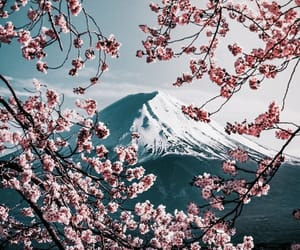 blossom, Dream, and mount fuji image
