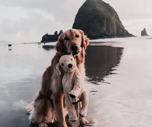dog, retriever, and travel image