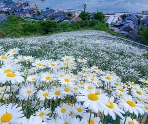 campo, natureza, and flores image