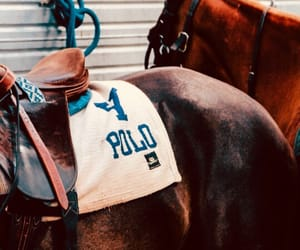 horses, preppy, and Polo image