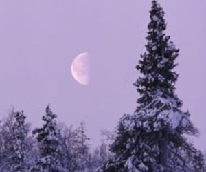 purple, lilac, and moon image