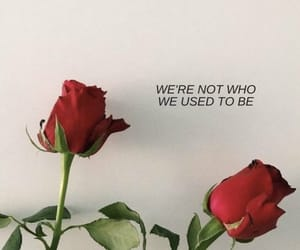 rose, quotes, and aesthetic image