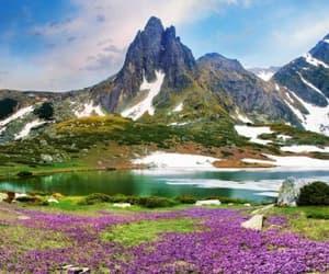 bulgaria, flowers, and lake image