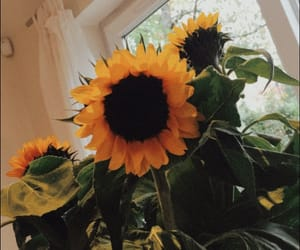 flowers, indie, and summer image