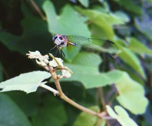 bugs, nature, and dragonflies image