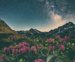 flowers, stars, and beautiful image