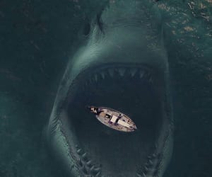 animal, barco, and photography image