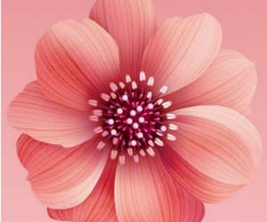 flower, wallpapers, and iphone image