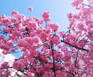 blossom, blue sky, and germany image