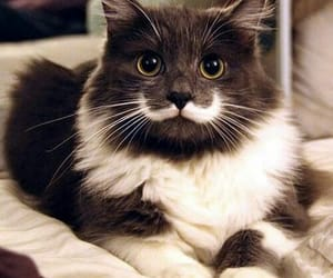 cat and mustache image
