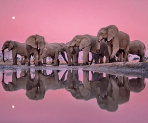 elephant, animal, and pink image