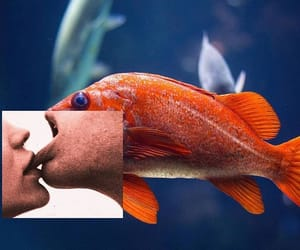 fish, aesthetic, and kiss image