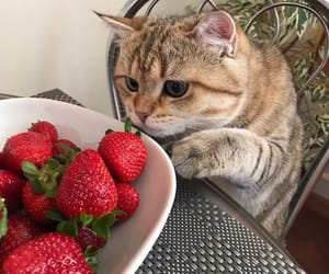 cat, strawberry, and animal image