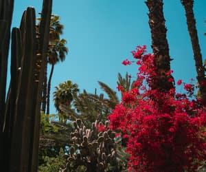 botanical, cactus, and flowers image