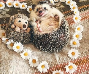 adorable, animal, and hedgehog image