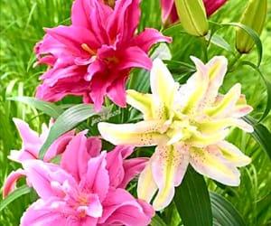 colores, flores, and belleza image